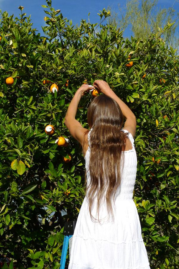citrus-02