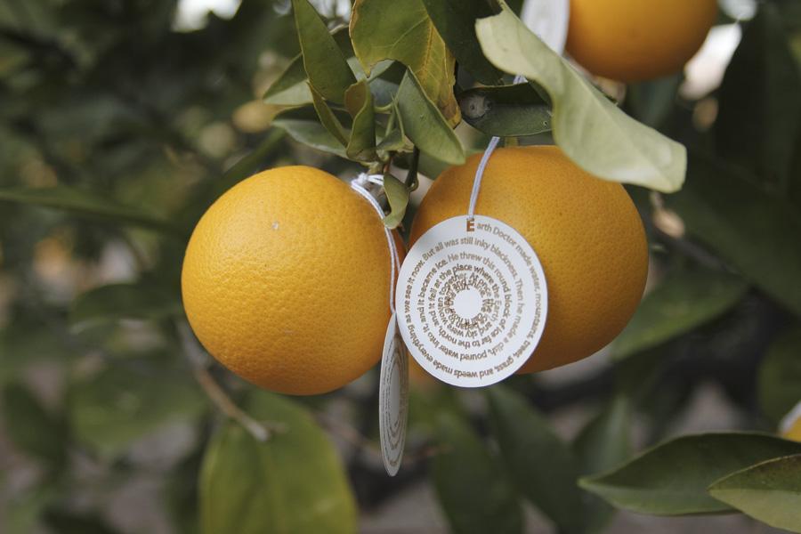 citrus-06