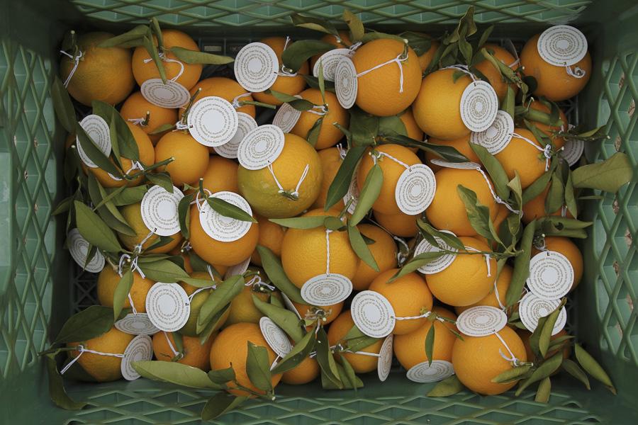 citrus-07