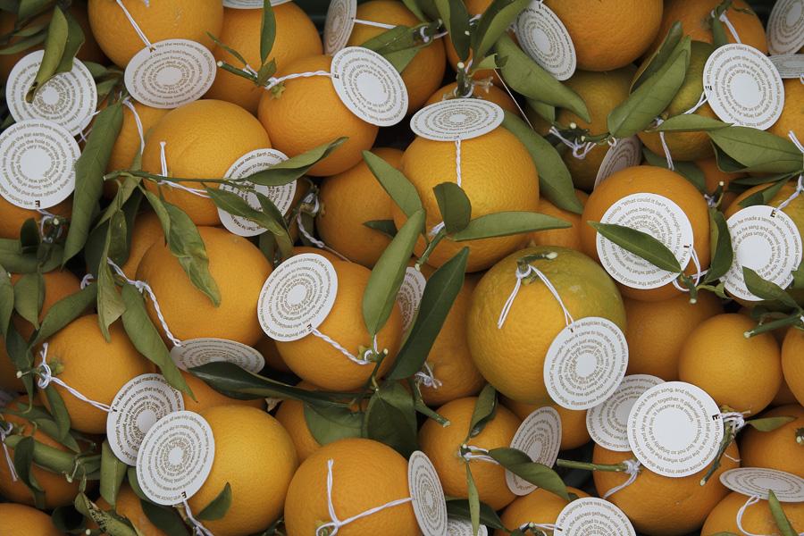 citrus-08