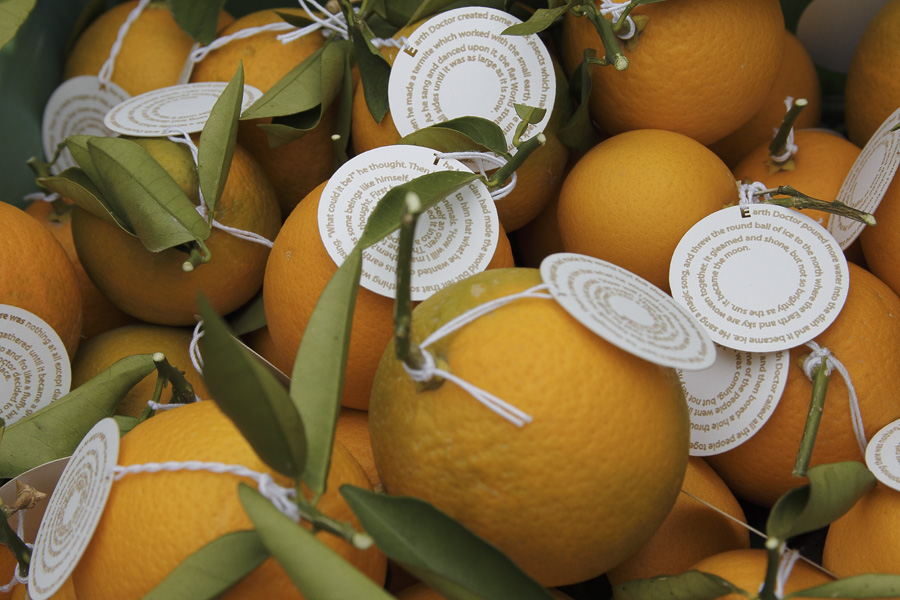 citrus-10
