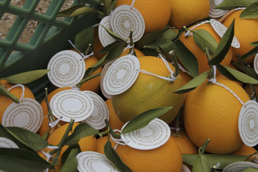 citrus-11