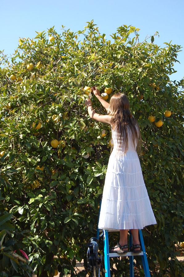 citrus-12
