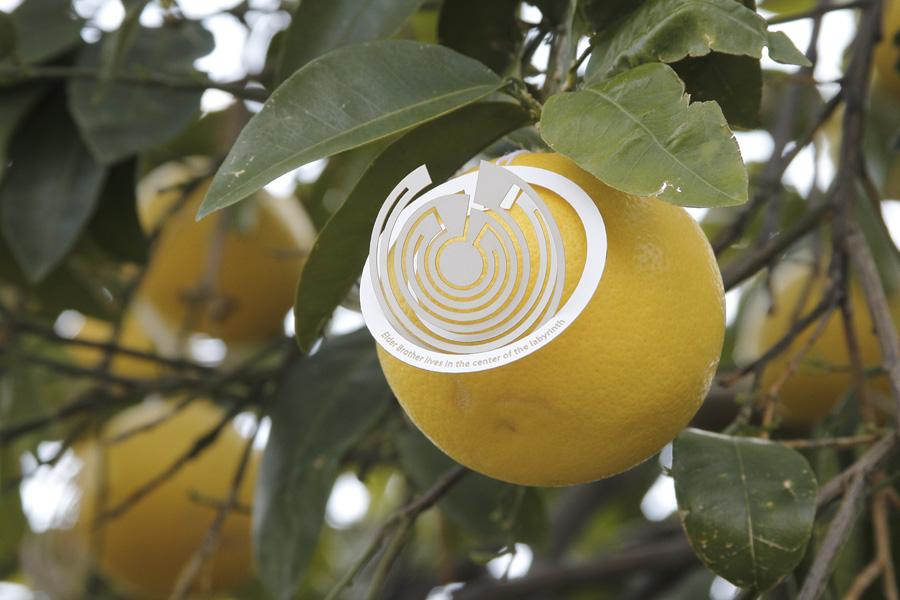 citrus-19