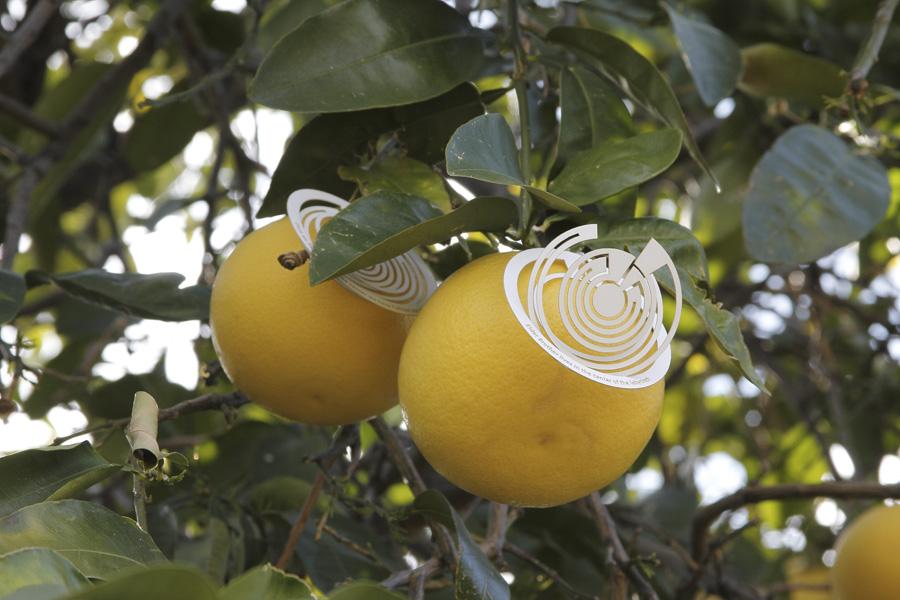 citrus-20