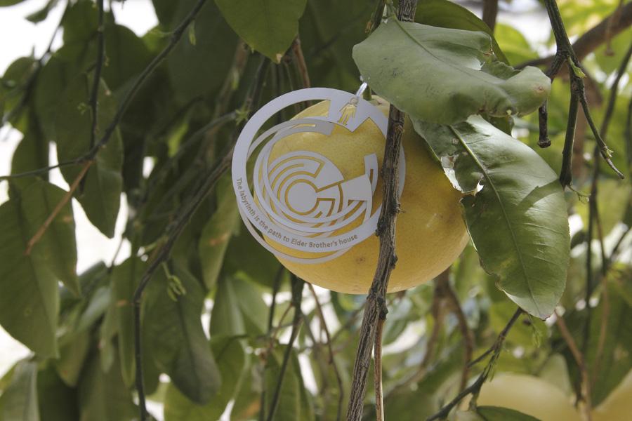 citrus-26