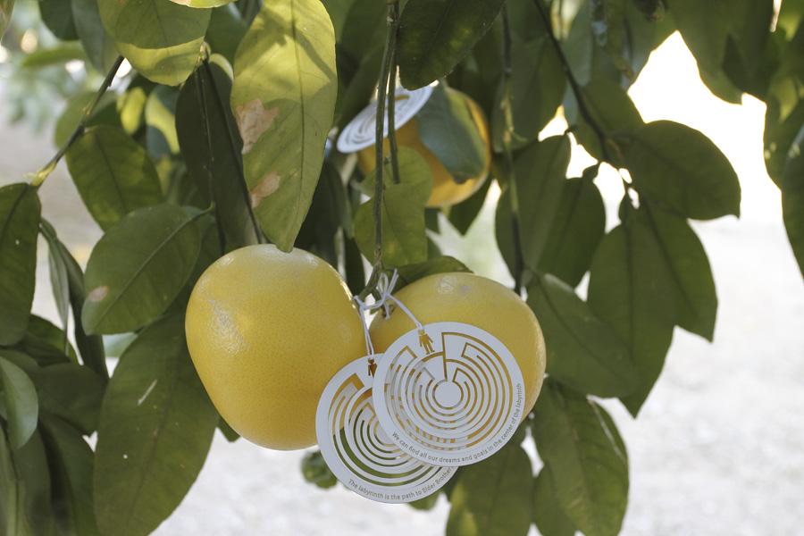 citrus-27
