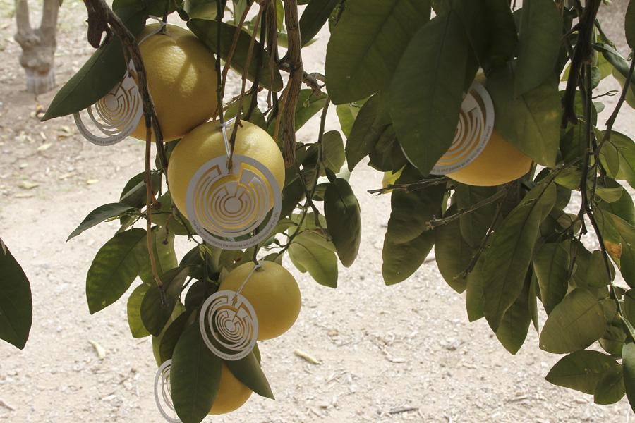 citrus-28
