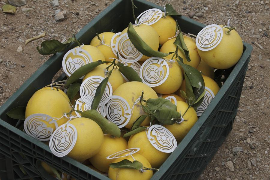 citrus-30