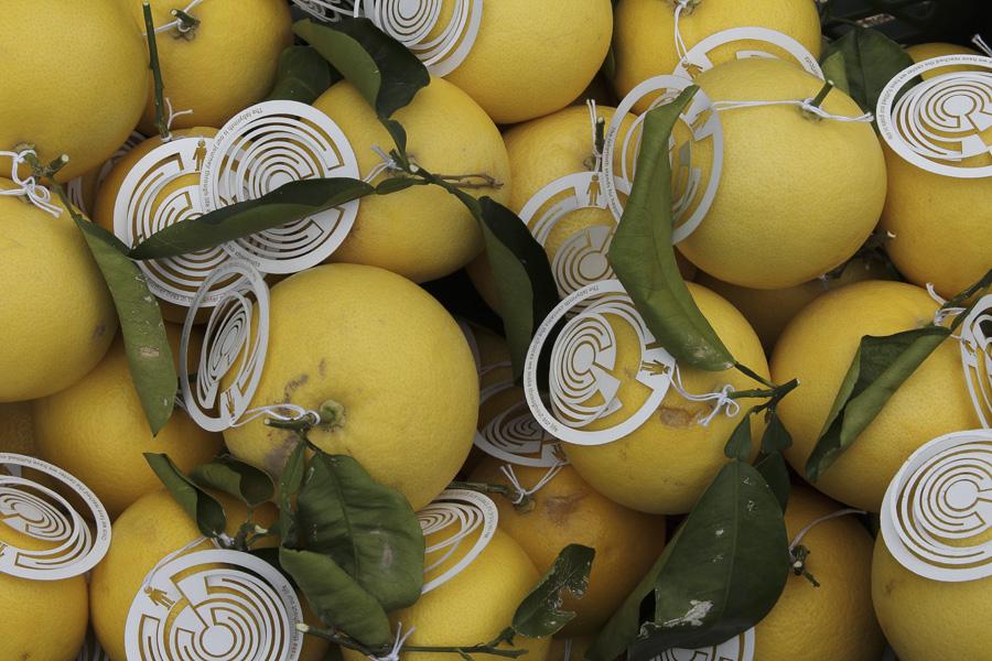 citrus-31