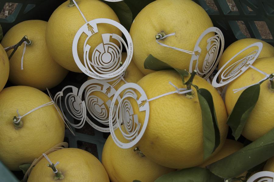 citrus-33