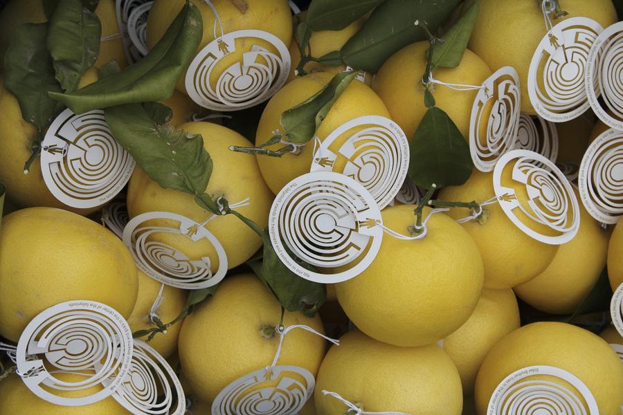 citrus-34