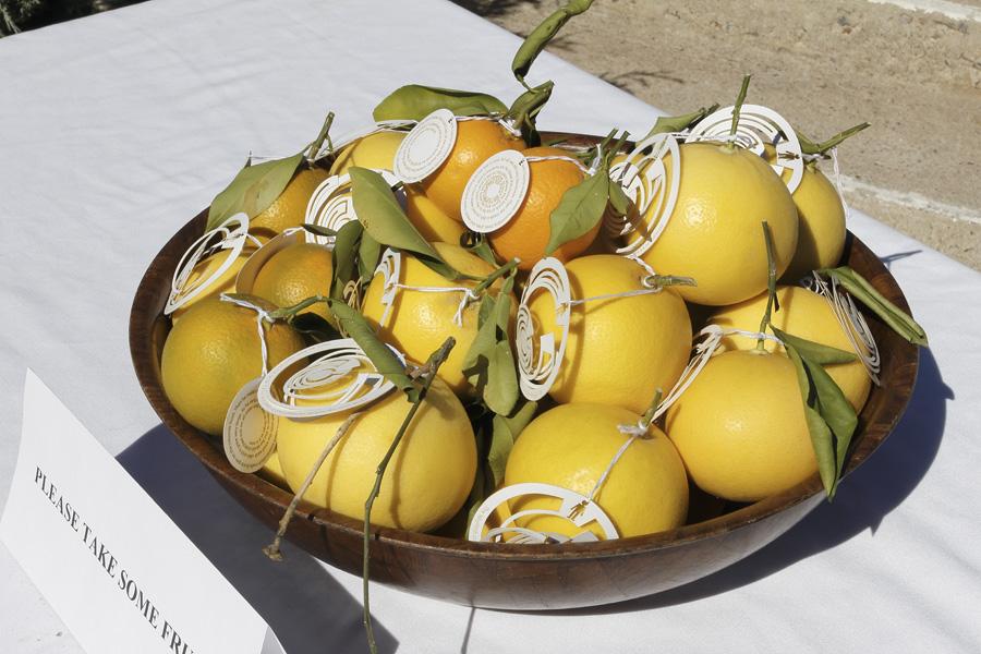 citrus-37