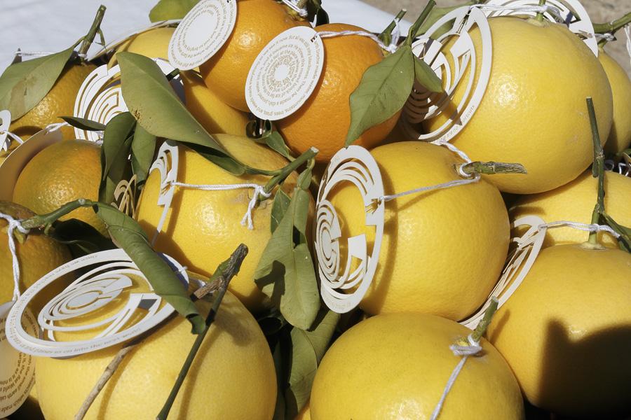 citrus-38