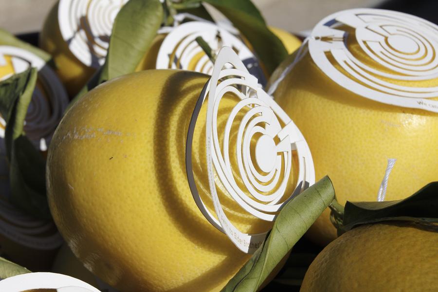 citrus-40