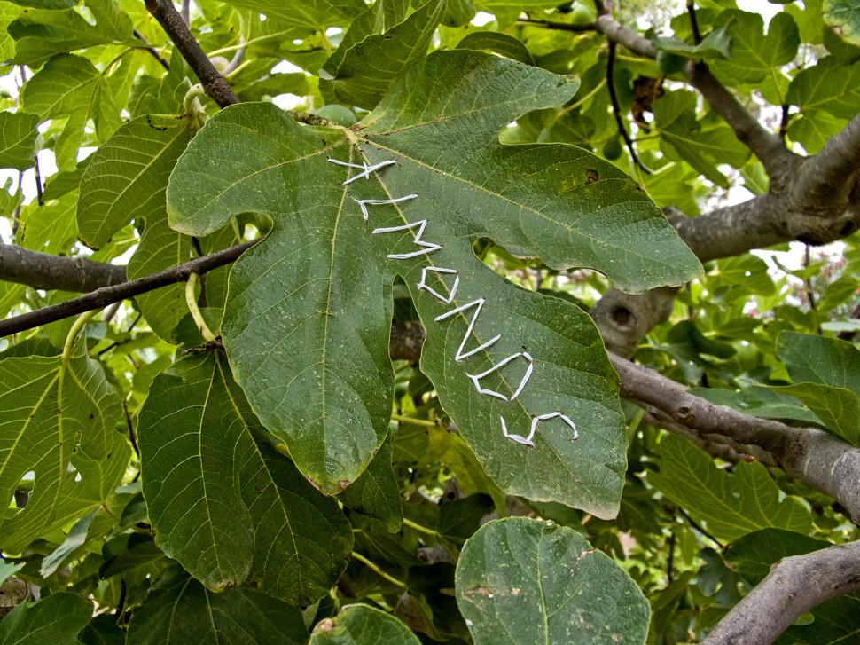 05-paradise tree
