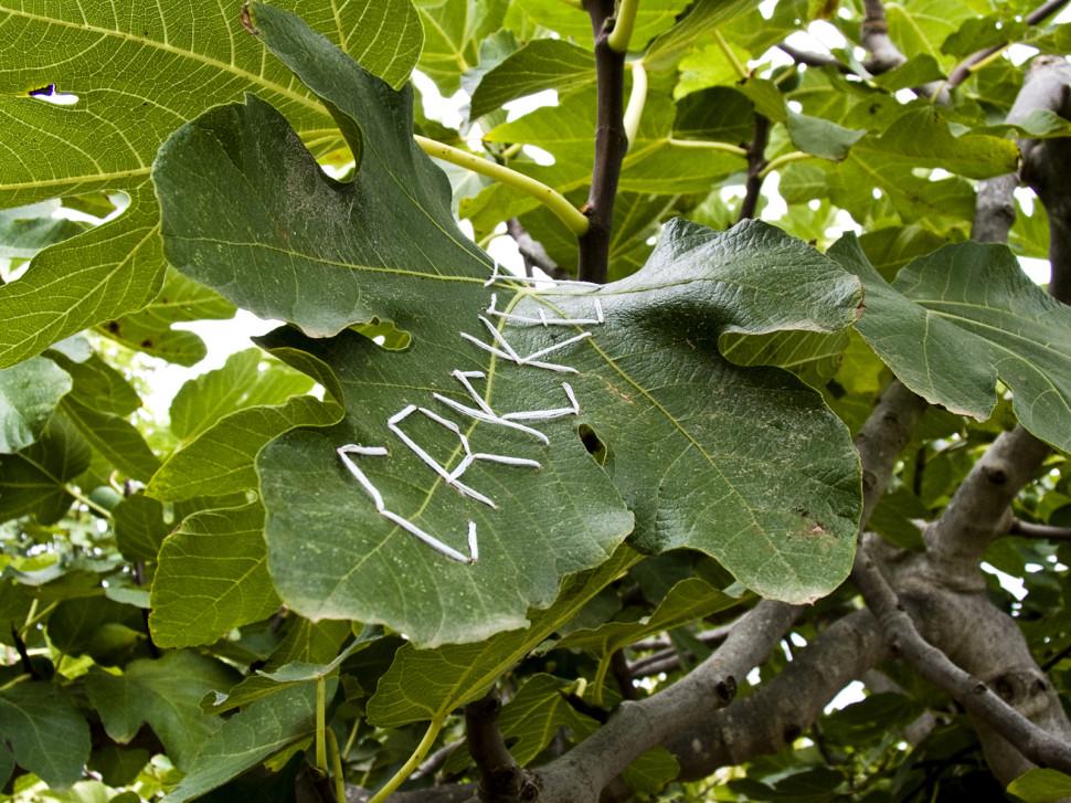 06-paradise tree