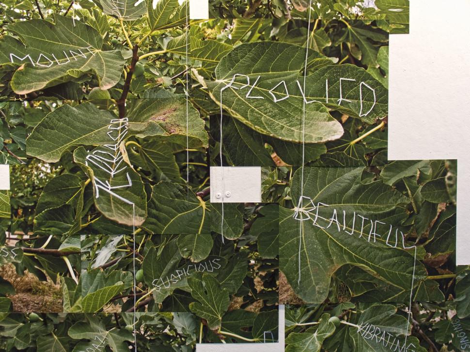 13-paradise tree